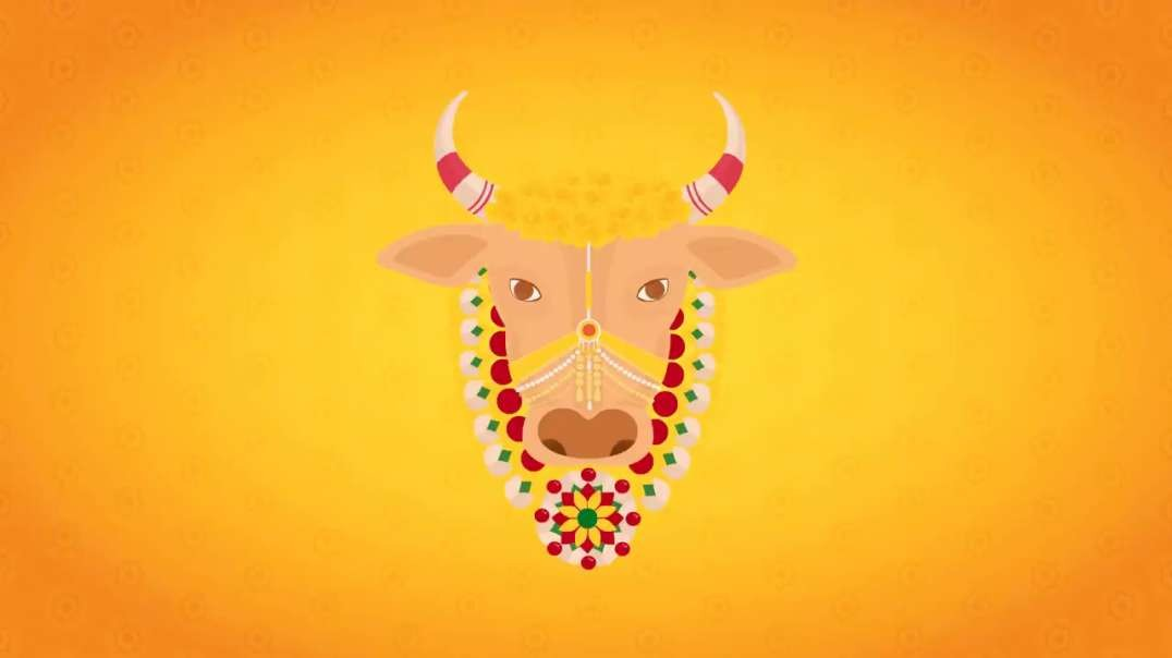 Best Pongal Wishes - Wish You Happy Pongal